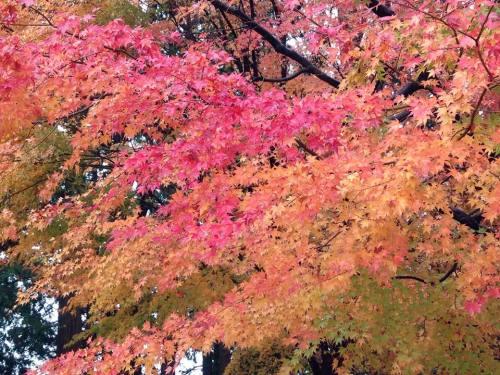 本山の紅葉.jpg