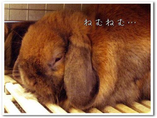 うさぎ専門ペットショップ「うさぎのしっぽ」柴又店 画像001-1.jpg