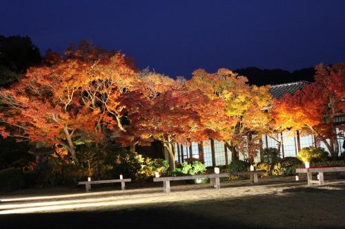 神戸市立須磨離宮公園もみじライトアップ1.jpg