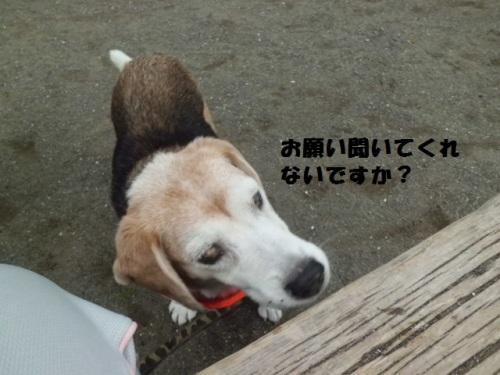 公園CIMG1913.JPG