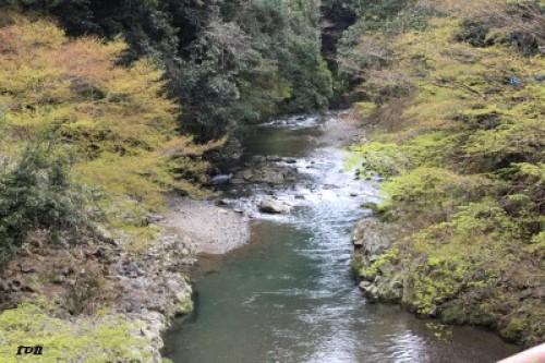 kyotosatoshi 367.JPG