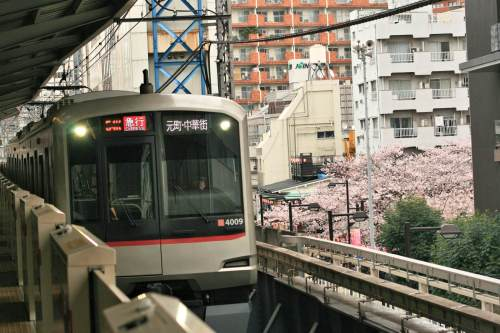 Tokyu 5050-4000 Series and cherry blossoms at Nakameguro