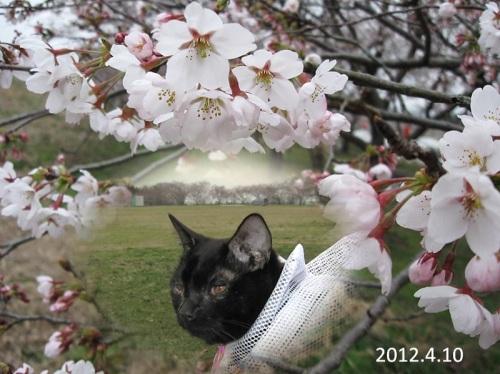 2012_04_10お花見しました.jpg