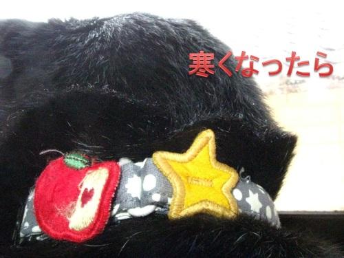 猫のセーター2.jpg