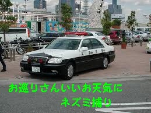 images7.jpg