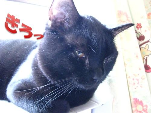 猫のセーター6.jpg