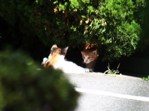 散歩道で見かけたじゃれあう子猫2匹