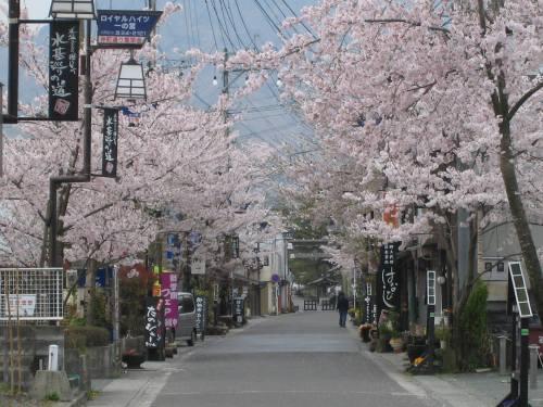 熊本県阿蘇市門前町商店街の桜.jpg