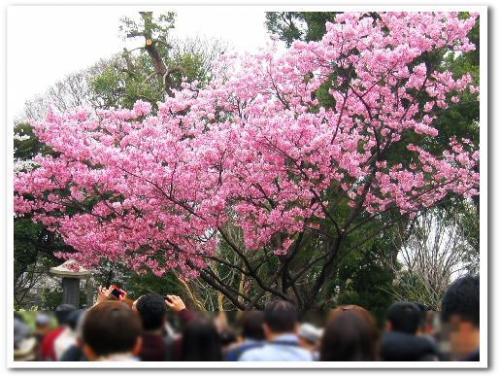 花見 桜 名所 オススメ スポット 東京 2013 上野公園005.jpg
