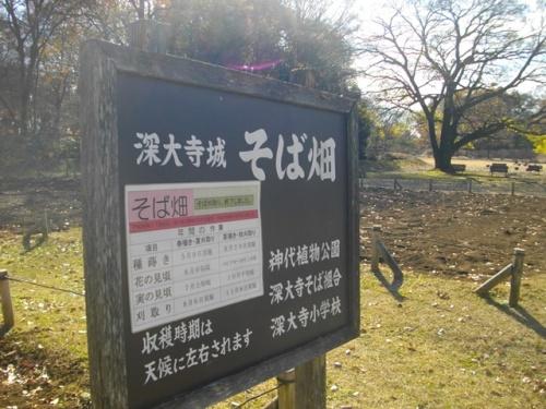 深大寺城そば畑.JPG