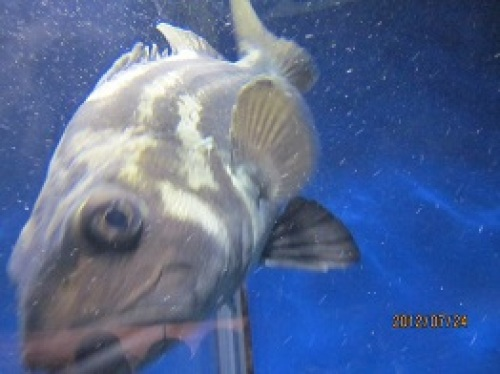 IMG_2765魚1.jpg