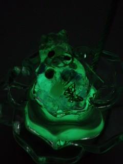 カエル蓄光中.jpg