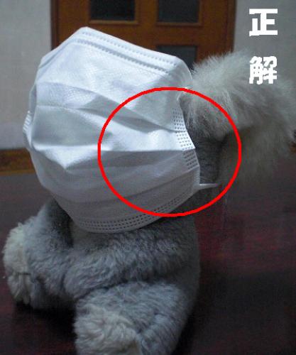 表裏 使い捨て マスク の