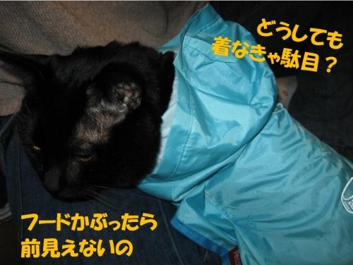 風よけ用にレインコートを買いました.jpg