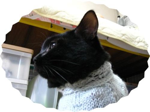 猫のセーター16.jpg
