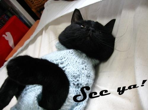 猫のセーター19.jpg