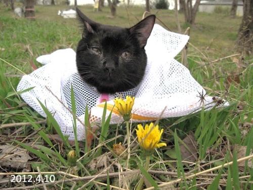 猫の防災対策