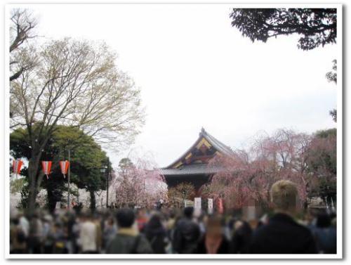 花見 桜 名所 オススメ スポット 東京 2013 上野公園004.jpg