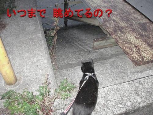 チャン13.jpg