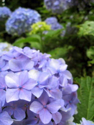 箱根フリーパスを使って箱根・芦ノ湖を観光してみた 029.jpg