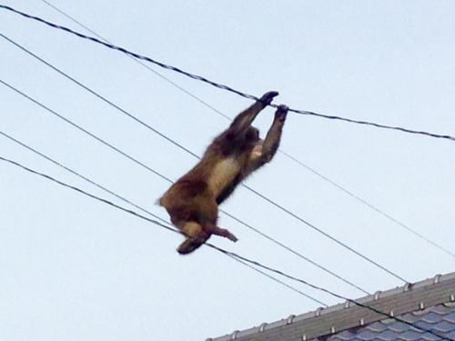 11-29 4.逃げるお猿さん