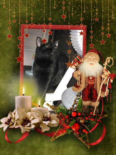 今日のチャンです_もうすぐクリスマス.jpg