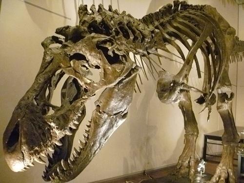 新設・恐竜の成長