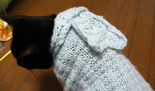 猫のセーター14.jpg