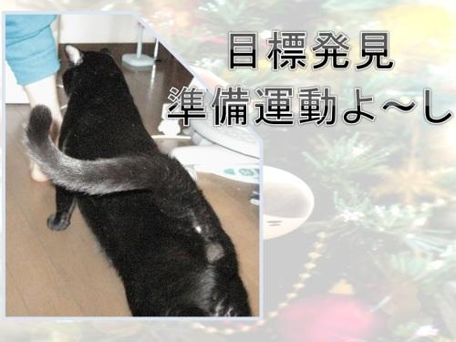 今日のチャン_伸び~.jpg
