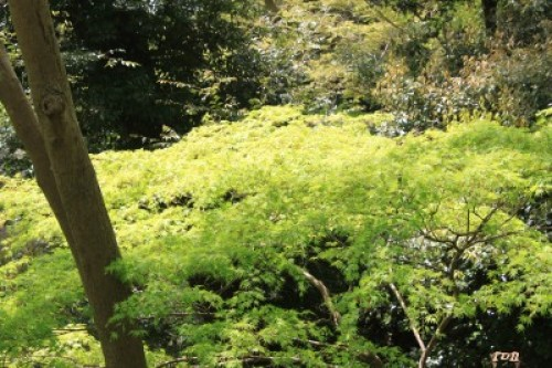 kyotosatoshi 175.JPG