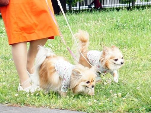 昭和 記念 公園 ドッグラン