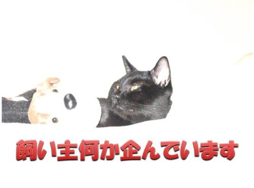 チャン2.jpg