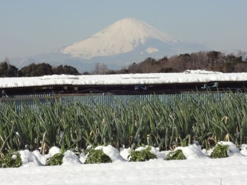 富士山とネギ.JPG