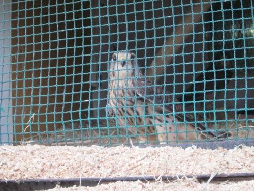 IMG_4462鳥.jpg