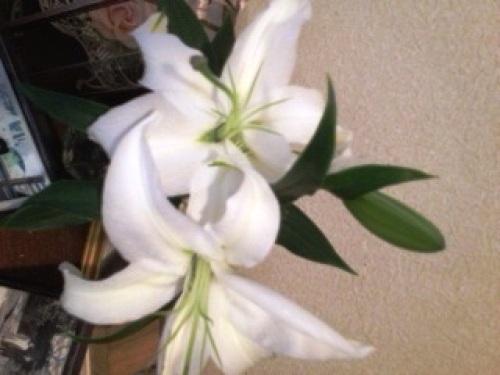 ユリの花.jpg