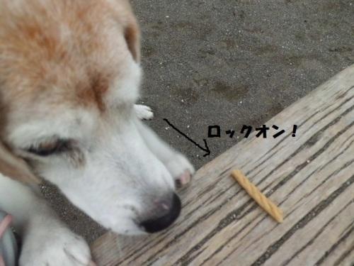 公園にてロックオンCIMG1910.JPG