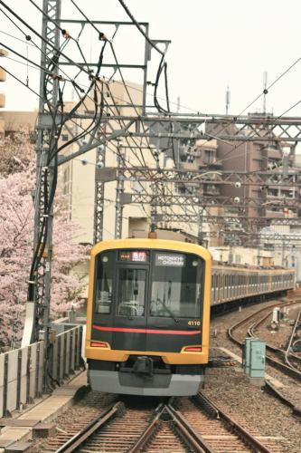 Tokyu 5050-4000 Series 4110F Shibuya Hikarie set and cherry blossoms