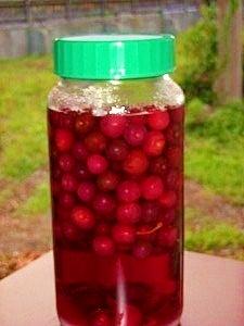 日本初サクランボの缶詰製造元*真っ赤なサクランボ酒
