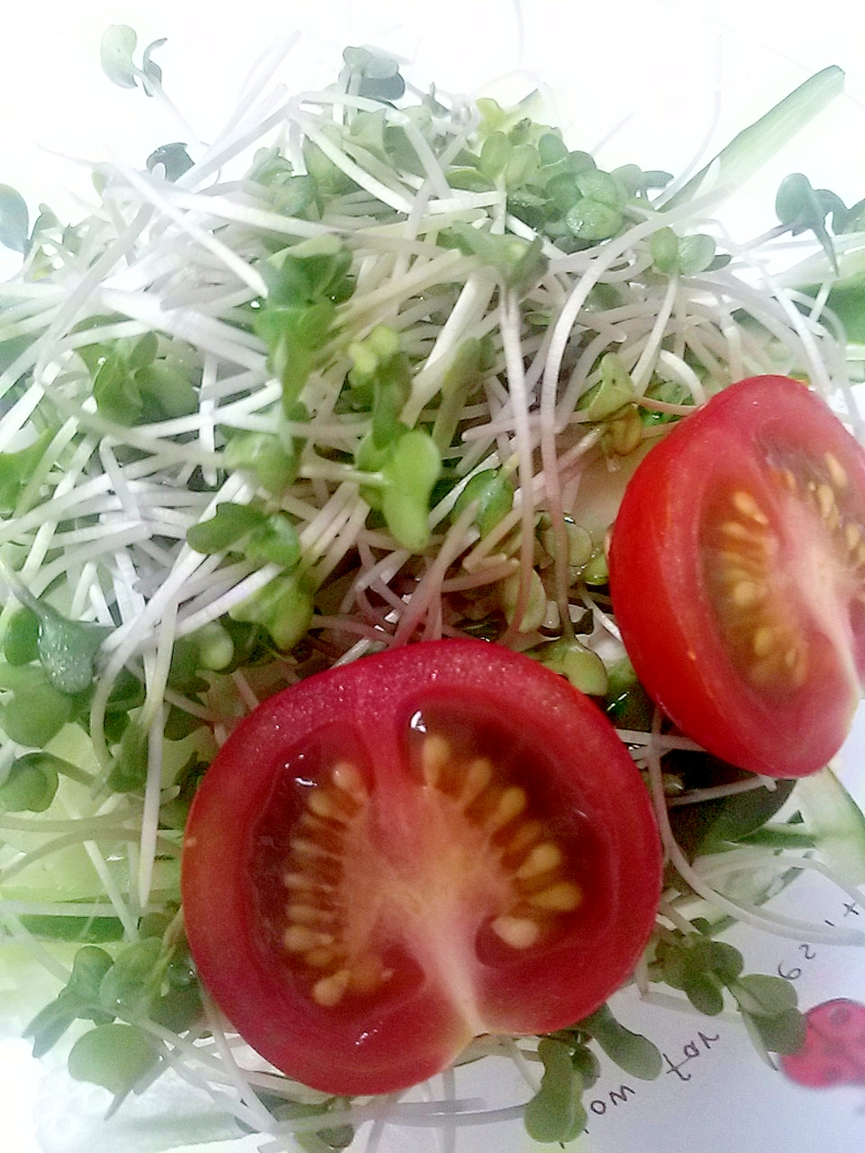 ブロッコリースプラウト☆きゅうり☆ミニトマトサラダ