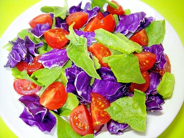 アイスプラントとミディトマト紫キャベツのサラダ