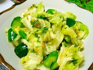 副菜に(/・ω・)/☆キャベツと胡瓜のシソ梅風味☆