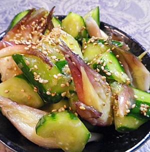 キュウリミョウガの塩麹生姜漬けごま油がけ レシピ・作り方 by leopoo|楽天レシピ