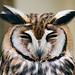 StripedOwl����