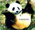 usagi_panda����