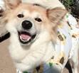 「命をつなごう!保護犬保護猫プロジェクト楽天ポイント 犬猫ギフト 深切物資26回目の発送募集アイワングループポイント消化」の商品レビュー詳細を見る