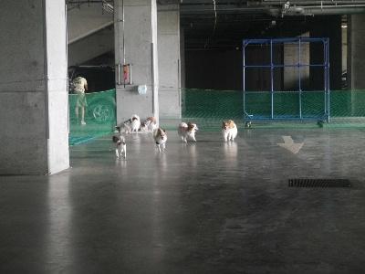 2012千葉オフ会9.JPG