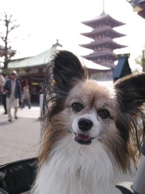 2012浅草4月1.JPG