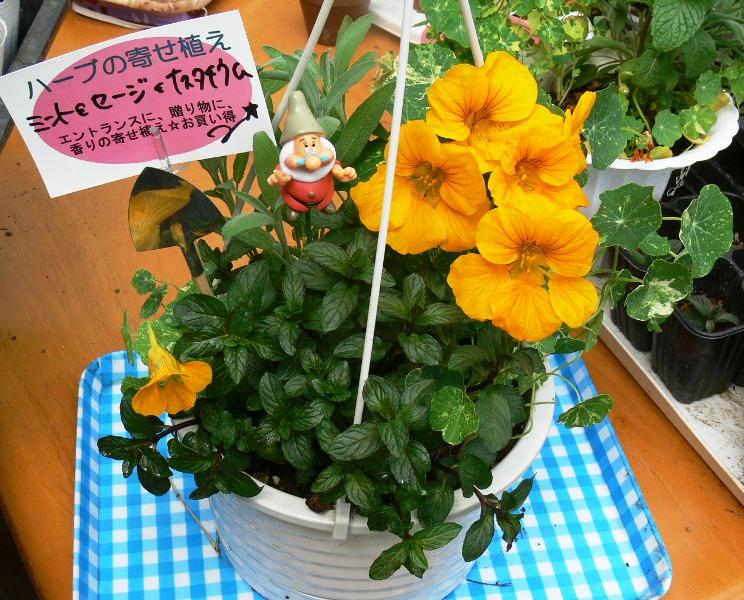 kobito-yose00-1.JPG