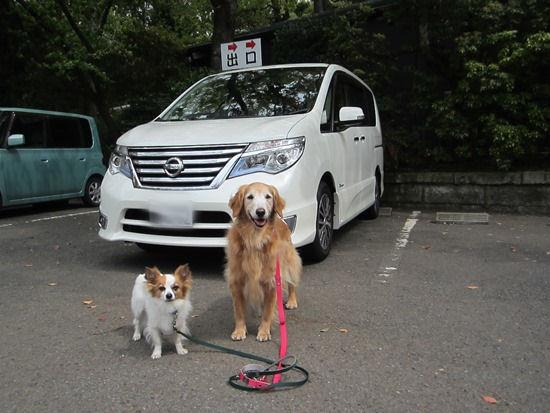 寒川 神社 車 お祓い