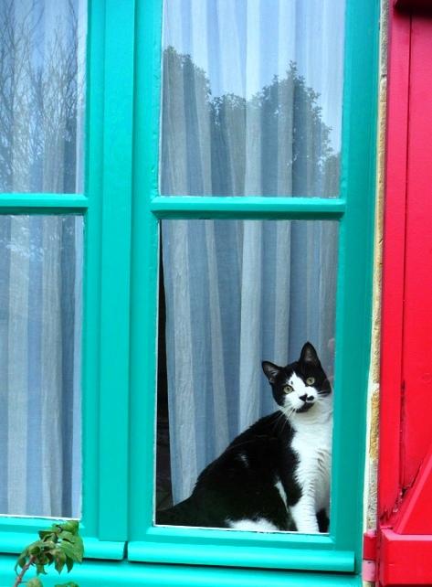 0603 Cat00.jpg
